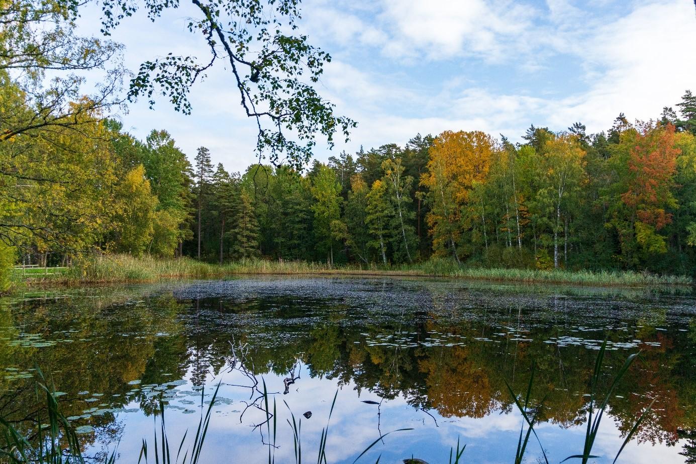 Suede lac et forêt